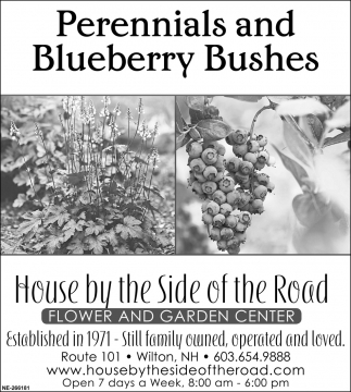 Perennials And Blueberry Bushes