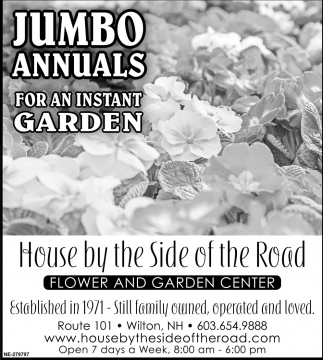 Jumbo Annuals